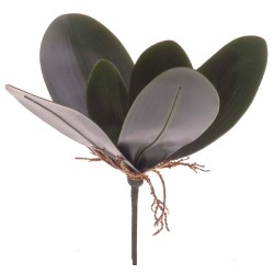 ORCHID BUTTERFLY LVS X7 GREEN