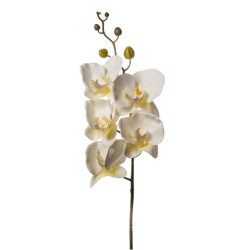 PHALENOPSIS NATURAL TOUCH WHITE